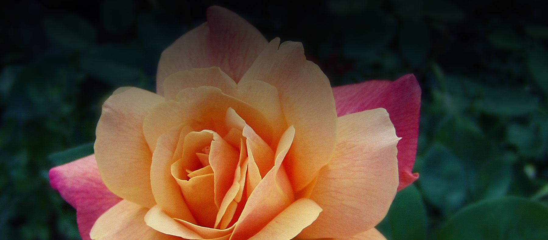 Kvety IZABEL